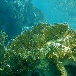 Reef Oasis Beach Resort Foto