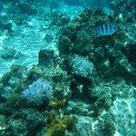 Fish and blah coral