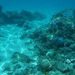 Clear water, dead coral