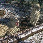 Foto de Jungle Cat World Wildlife Park