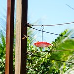 Hummingbird in flight! I am just one of the differnt types of hummingbirds you wiill see.