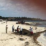 The seaweed clean-up