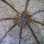 Intricate ceiling stone work