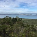 Photo de Rangitoto Island