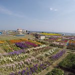 Photo of Flower Fields of Chikura-cho