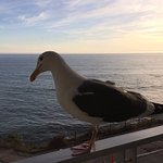 Mr. Seagull says howdy.