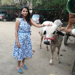 me with the angry bullock...