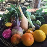 We ate all these beautiful & delicious vegetables!
