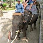 Foto de Agus Bali Private Tours
