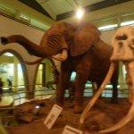 ahmed the celebrity elephant