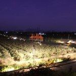 grapes farm