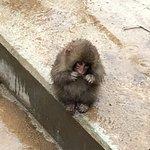 Cute Snow Monkey