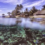 Centara Grand Maldives House reef