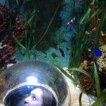 Photo de Sea Life Aquarium