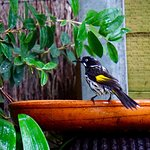 Photo of Lorneview Bed & Breakfast