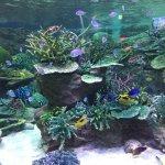 Photo of Port of Nagoya Public Aquarium