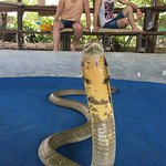 Photo of Ao Nang Snake Show