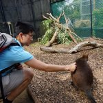 The wallaby is super curious.