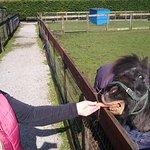 Photo of C & J's Animal Park