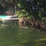 Photo de Dolphins Plus - Key Largo