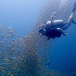 Me swimming with a school of yellowtail snappers, it's as unbelievable as it looks!