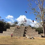 Macaws flying over pyramid