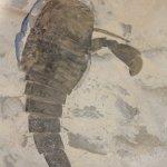The sea scorpion