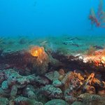 Foto de Centro de buceo Top Diving