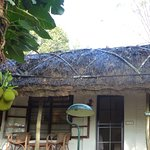 Our lovely bungalow, with a jackfruit tree right outside the door