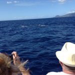 Photos of the whales we saw.  Simply amazing.