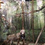 Belovezhskaya Pushcha / Bialowieza Forest Foto