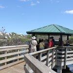 Foto Wakodahatchee Wetlands