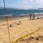 Owner caring for monk seal
