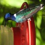 Humming bird at the Rancho