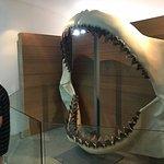 Photo de Biomuseo