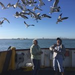 Feeding the gulls on the stern of the ferry