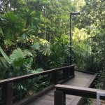 rainforest boardwalk at South bank Brisbane