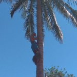 This young man made climbing a coconut tree seem easy