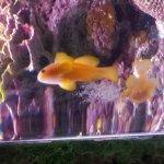 Photo de Shedd Aquarium