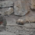 Photo of Biotropica la Serre Zoologique