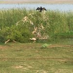 Photo de Bundala National Park