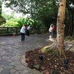 Singapore Botanic Gardens Foto