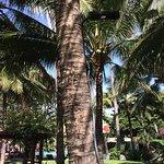 Oriental Pearl Beach Resort Foto