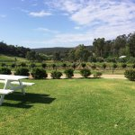 The Cider, Wine & Whiskey Tour - Views over the vineyards