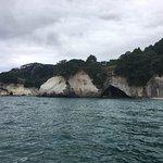 Photo of Glass Bottom Boat Whitianga