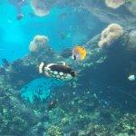 Foto de Sea World