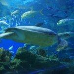 Fishes in the Aquarium