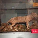Photo de The Manchester Museum