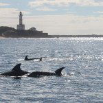 Dolphins in front of the lighthouse