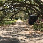 Grounds of the Charleston Tea Plantation